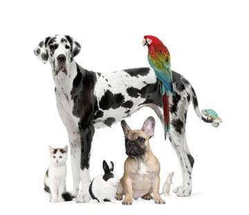 animal pictures - Google-haku