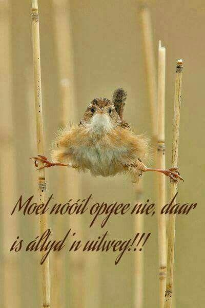 Moet nooit opgee nie... #Afrikaans #Success #Dierbaar