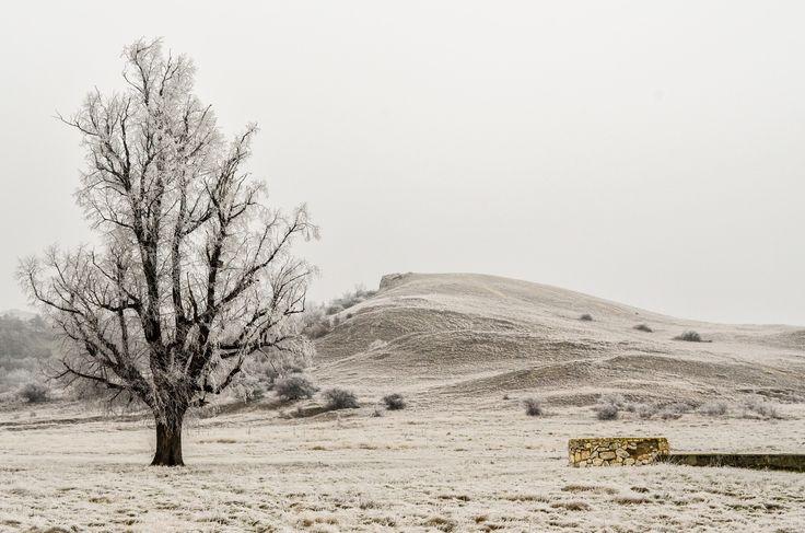 Róth Hajnalka Egy fagyos napon A Páskomi dombok magányos hársfája zúzmarába burkolózva. Több kép Hajnalkától:  https://www.facebook.com/nalkaroth/