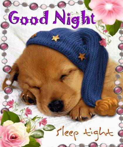 Whatsapp A Cute Goodnight Wish To Your Doglovers Friends With This