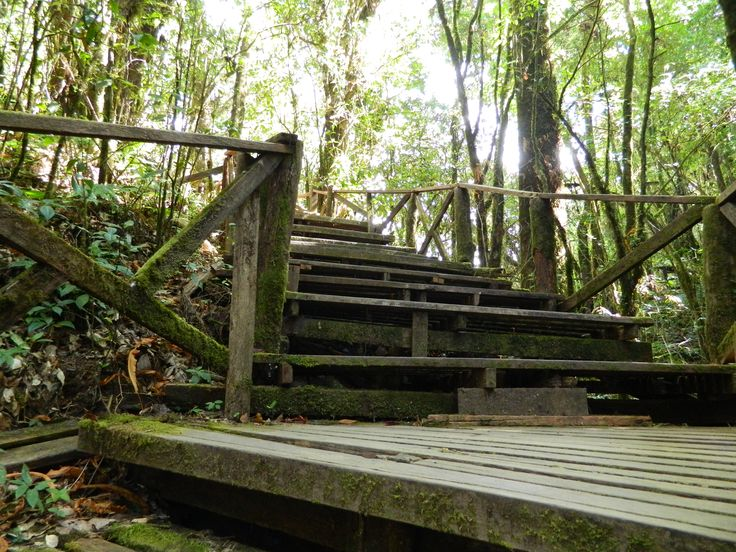 Wooden Walkway, Doi Inthanon National Park, Thailand