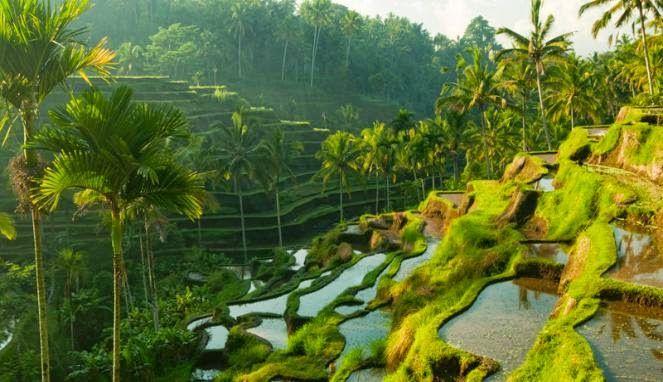 Nusa Indah | Tiket Pesawat Murah: Bali dan Lombok Masih Jadi Surganya Bulan Madu