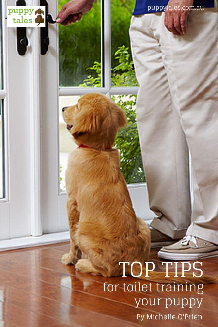 Top tips for toilet training your puppy Training your