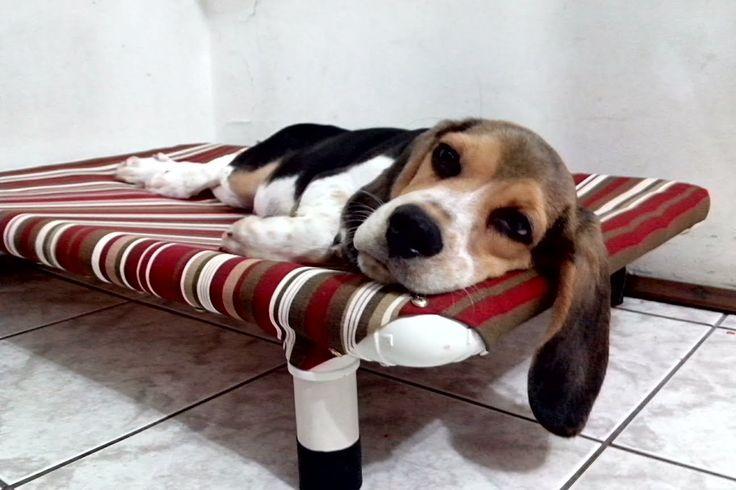 Cama PVC PET Cachorro & Gato - Veja como fazer com baixo custo, resisten...