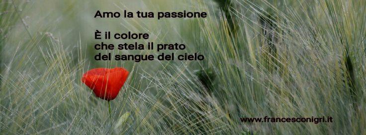 Amo la tua passione  È il colore che stela il prato del sangue del cielo  www.francesconigri.it