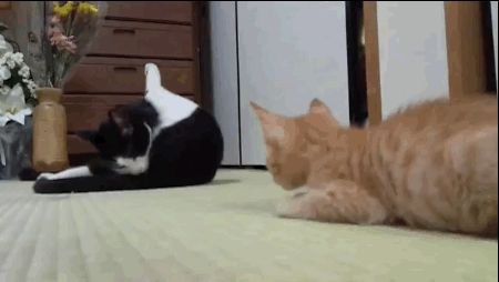The sneakiest boop of the year. | 22 Boops That Changed The World In 2013 #humor #cat @BadgerMaps