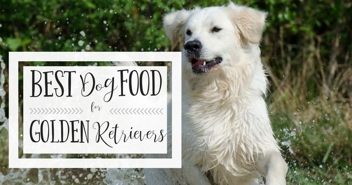 Best Dog Food For Golden Retrievers Is It Raw Or Commercial