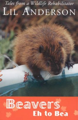 Beavers Eh to Bea is the story of Lil Anderson, a well known scientist in the Lake of the Woods area, as she cares for, and falls in love with, an orphaned beaver named Eh. Two years of work, adventure, fun and sorrow see Eh through to beaver adulthood and eventual release.