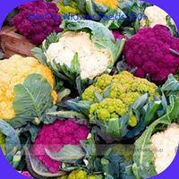 Mix cuatro variedades de semillas de coliflor, Pack profesional, 300 semillas / paquete, orgánicos de la herencia verduras de oro púrpura blanco verde