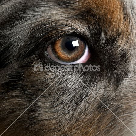 Best Time For Your Close Up Images On Pinterest Up Dog - 24 detailed close ups of animal eyes
