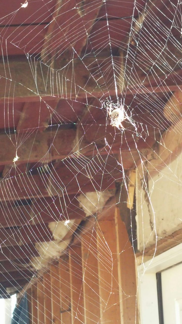 Confessions of a Corn Fed Girl: Clearing the Cobwebs and Killing Spiders. Do you need to slay some creepy, unwelcome- albeit familiar- invaders in your life? Me too.
