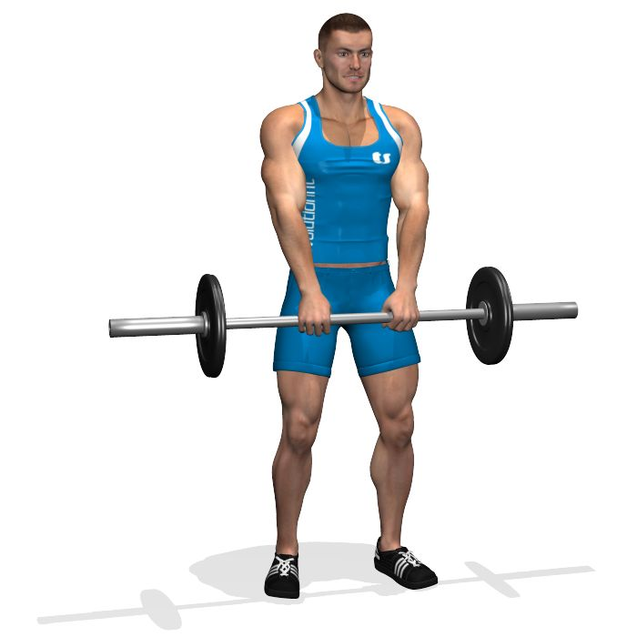 STANDING BARBELL UPRIGHT ROW INVOLVED MUSCLES DURING THE TRAINING TRAPS