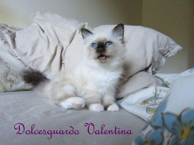 Dolcesguardo Valentina a 2 mesi