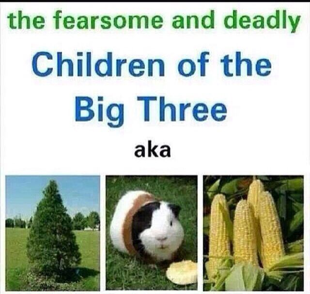 A pine tree (Thalia Grace), a guinea pig (Perseus Jackson), and corn (Nico di Angelo). Yet they are trusted with weapons....