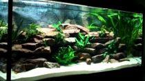 Aquarium Becken 969