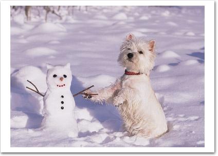 "Meet my friend ""Frosty"" Paws - Lol --sooo cute <span class=""EmojiInput mj230"" title=""Black Heart Suit""></span>"