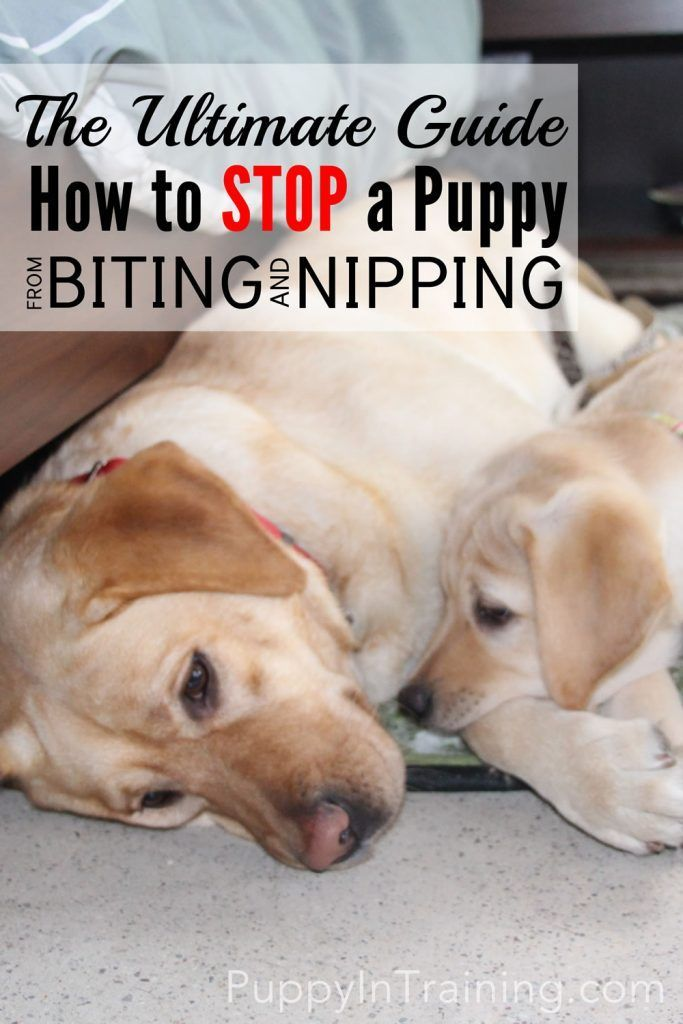 how to get a dog to stop nipping