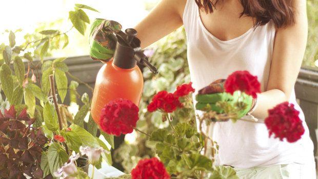 Ocet, olej, saponát: skvělý domácí přípravek proti škůdcům u kytek