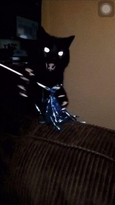 Black cat 🐈 ⚫️