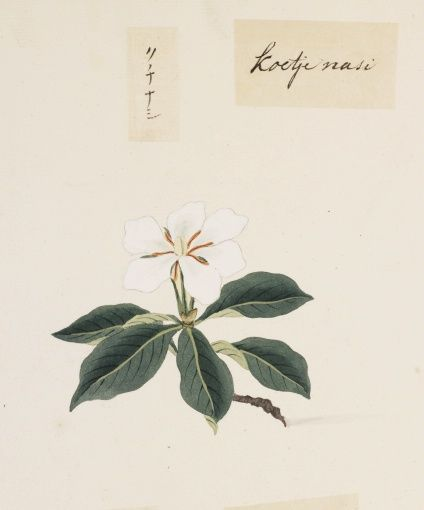 "O-Jewel Blog Kawahara Keiga picture book Vol.2 ""botanical art"""