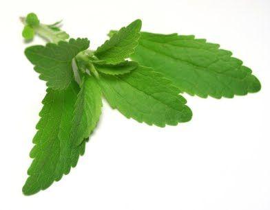 """Stevia o """"estevia"""" Contraindicaciones y efectos secundarios posibles"""
