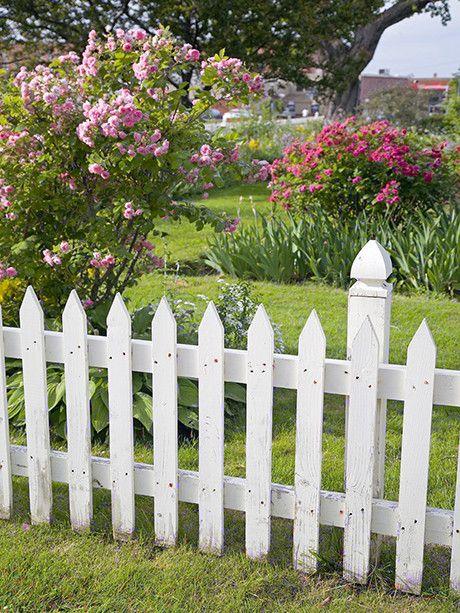 White Picket Fence / 454