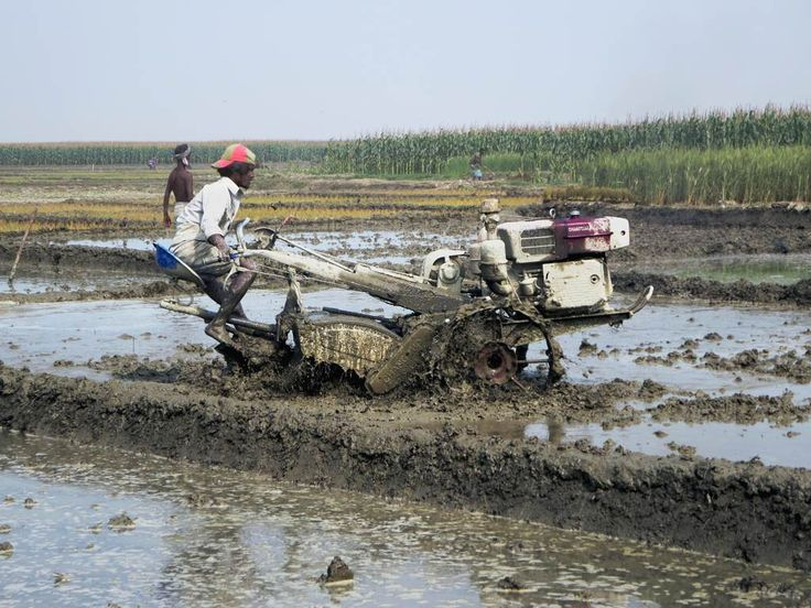 Small tractors of this kind are used to plow the riice paddies of Bangladesh. This example was seen on a char (sandbank island) in the Jamuna River.