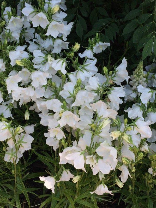 best 25+ fleurs printemps ideas on pinterest   fleurs, arbre de