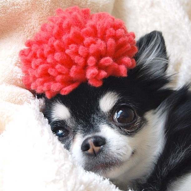 17 Best Images About Pins For Pets On Pinterest: 17 Best Images About Dog Fashion On Pinterest