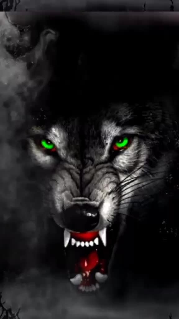 Pin By Hamnamughal On Lehenga Angry Wolf Wolf Wallpaper Angry Animals Cool wolf backgrounds for android