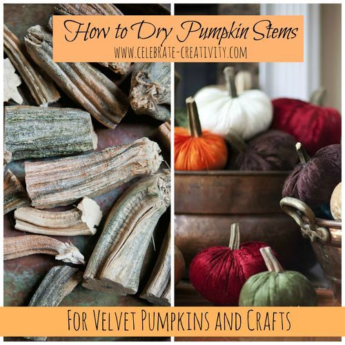 Learn how to dry pumpkin stems for crafting projects. Save those pumpkin stems from your carved Halloween creations.