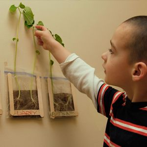 What's the best way to understand how a seed turns into a plant? Watch it happen!