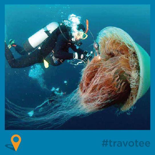 Best Marine Biology Bry Images On   Nature Sailor