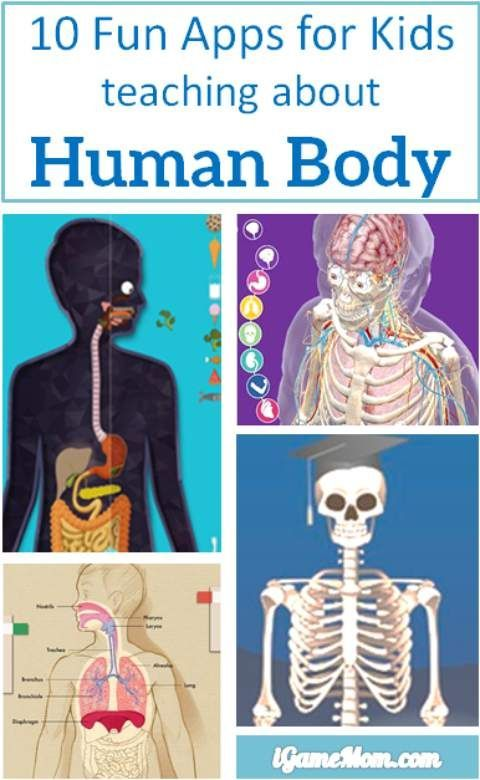 10 apps for kids to learn about human body -- apps are perfect learning tools to learn human anatomy and functions. With 3D interactive multi-media features, it is fun to see the inside of your body and play with the interactive visuals and videos. Kids w