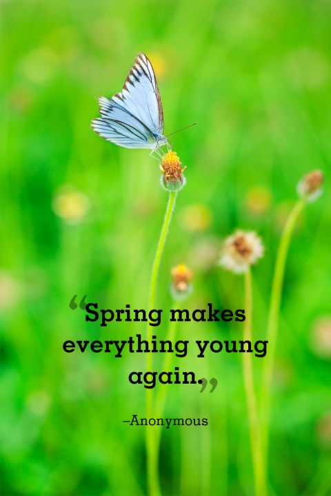 20 Beautiful Spring Quotes That Will Make You Smile Author Unknown: