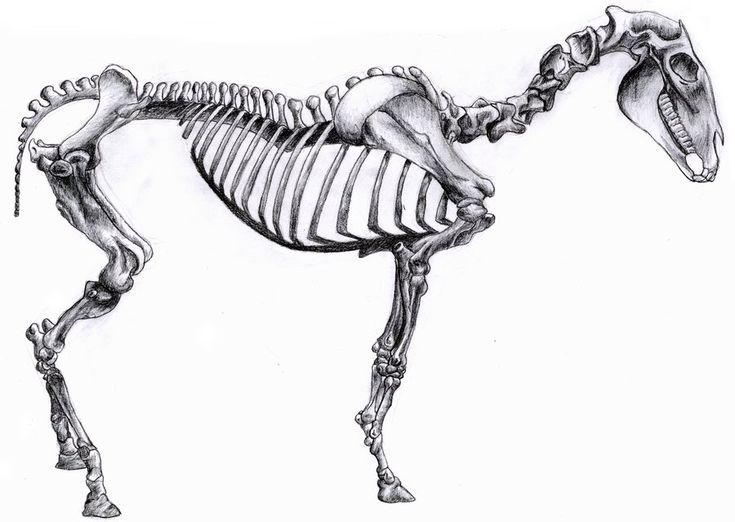 Horse skeleton again