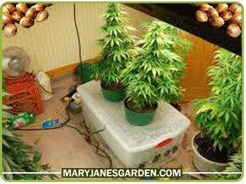 Hydroponics System for plants  http://highpower4s.com/what-are-the-benefits-of-using-led-grow-lights/