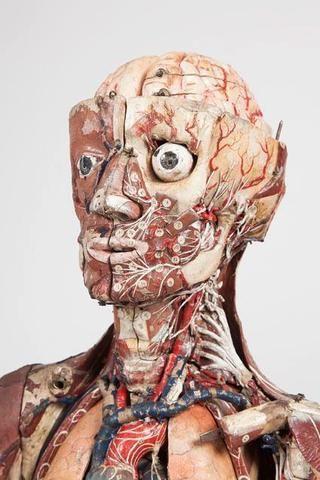 Plus de 1000 id es propos de cabinet de curiosit sur for Anatomie du meuble