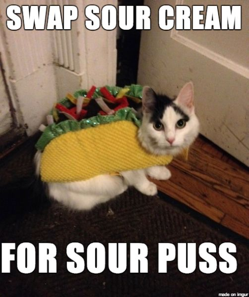 10 funny halloween cat costume memes httpmycatcentralcom10 - Funny Cat Halloween