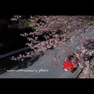 早春お散歩 #静岡#伊豆 #photography #fiat500abarth #fiat500 #italian #fiat #italy #italia #cherryblossom #cherryblossoms #spring #春 #桜 #classiccar #classiccars #drive #japan #japanese #japantrip #nature #loves_world #love_natura #loveofmylife #happyweekend #happy #flowers #flower