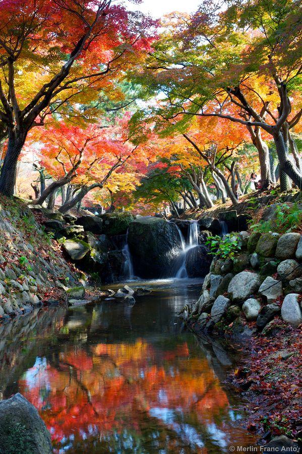 Photo : Foret et rivière à Nara, Japon (by Merlin Franco Anto F)