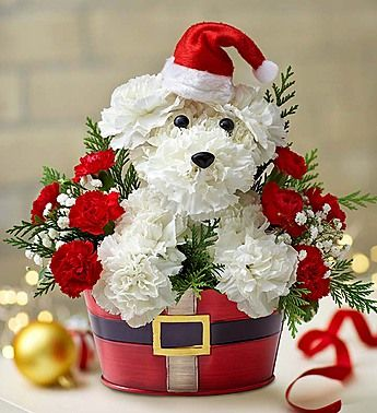 Holiday Flower Arrangements- Christmas- white carnations, red mini carnations, gypsophila, variegated pittosporum