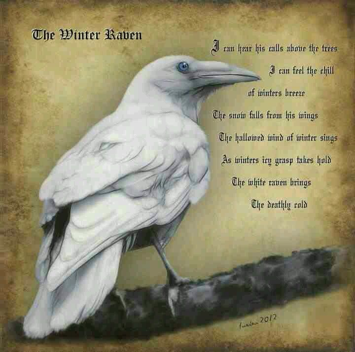 The Winter Raven.  Though I am loathe to pin pics that contain spelling and grammatical errors, I wanted this picture.  /sigh
