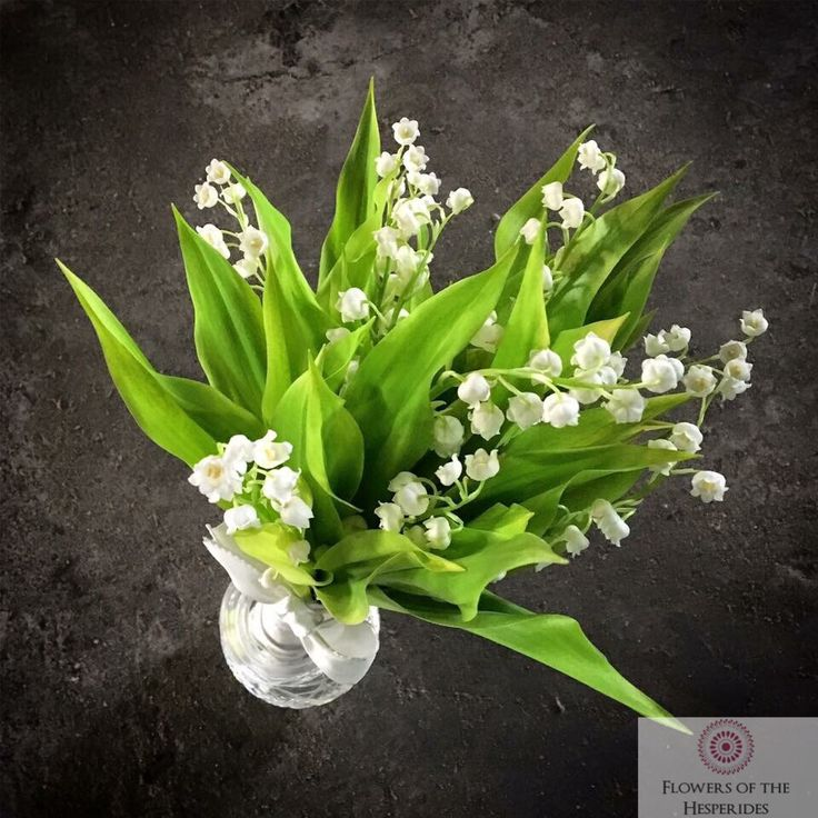 Lily of the Valley Posy, Bridesmaid Bouquet, Summer London Wedding - Flowers by Flowers of the Hesperides