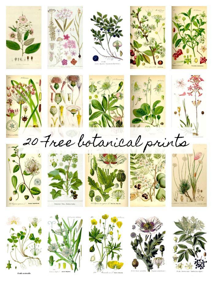 20 free botanical prints and easy diy wall hanging | wall art ...