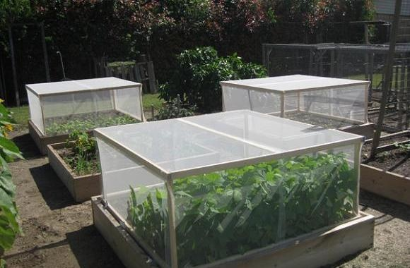 Vegetable garden design set up maintenance your own for Vegetable garden maintenance