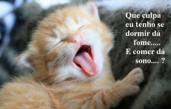 www.palavras de gatos engracados.com | Imagens com mensagens inteligentes e divertidas para postar no ...                                                                                                                                                      Mais