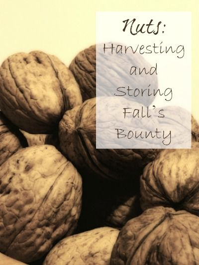 Nuts: Harvesting and Storing Fall's Bounty