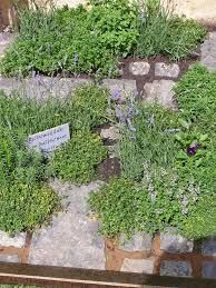 herb garden in paving - Google Search
