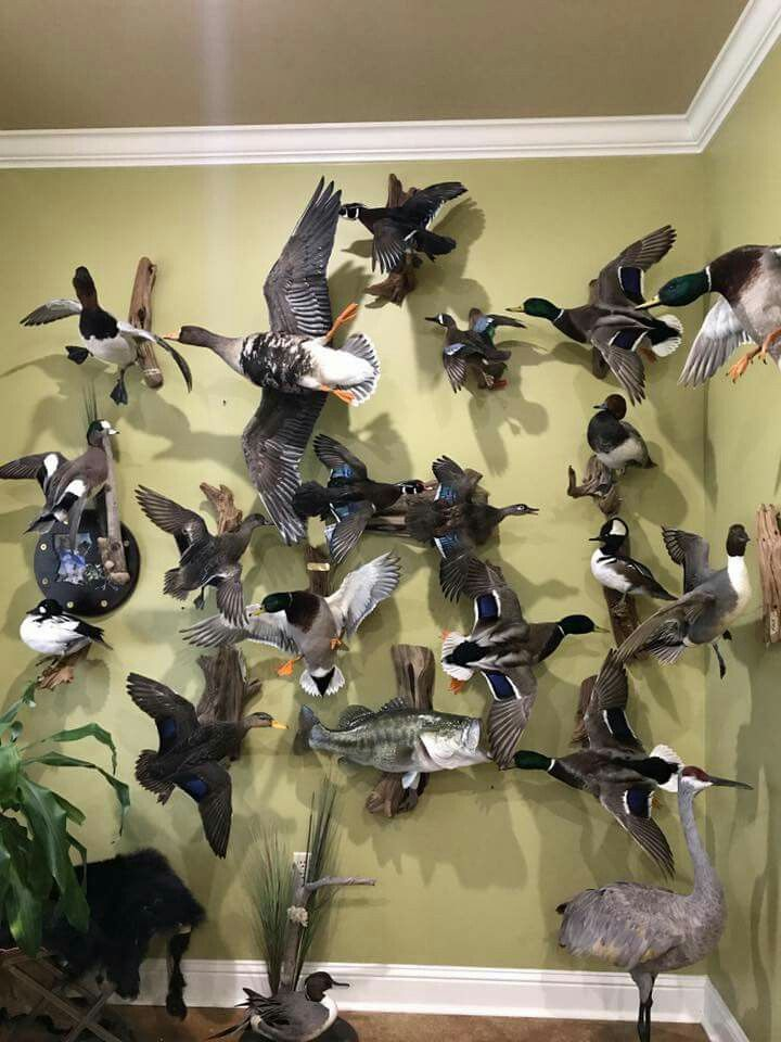 Pin By Mark Bowers On Taxidermy Pinterest Taxidermy